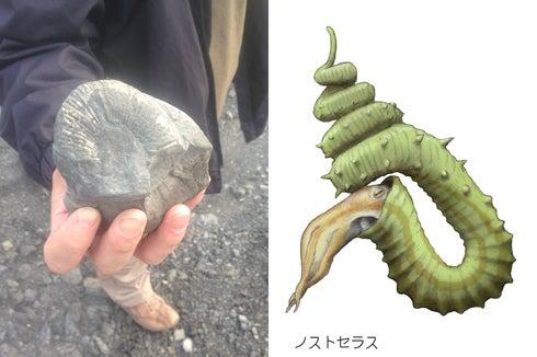 ノストセラスの化石と復元画