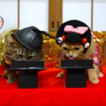 ひな祭り-仲良し猫