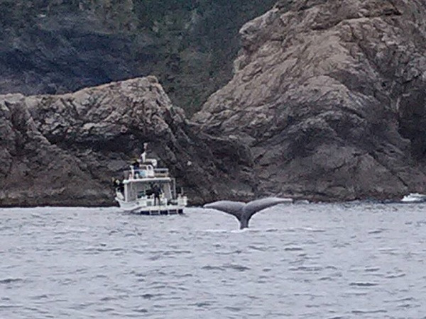 奄美大島クジラ162