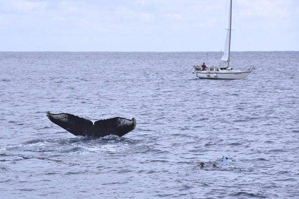 奄美大島ヨットクジラ