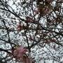 とうとう春が来た。