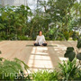 jungle sit…