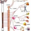 ドリームセラピー脊髄…