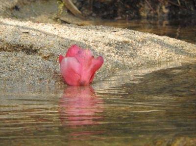 ひとつの花 春