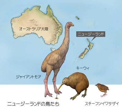 ニュージーランドの鳥たち