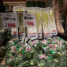 春の珍しい野菜~つぼ…