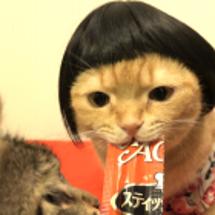 おかっぱ頭の猫