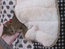 枕で寝る我が家のパンちゃん
