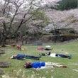【森林セラピー】桜ウ…