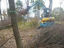 ナラ枯れ対策 伐倒処理 奈良県3