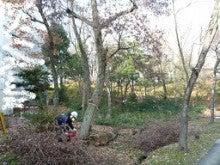 ナラ枯れ対策 伐倒処理 奈良県1