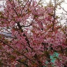春がやってきてた・・…