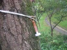 ナラ枯れ対策 誘引剤の設置 奈良県2