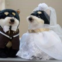 結婚して2年(=^x…