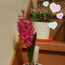 咲きました(*^▽^…