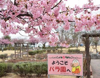 道の駅めぬま桜2016