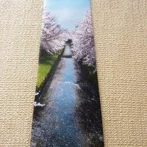 今週のネクタイ! 桜…