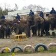 象がいっぱい