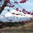 富士山と桃が綺麗なア…