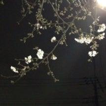 桜が咲きました☆彡