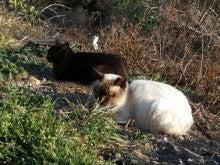 帷子崎西派の猫