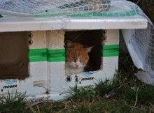 琴平山山上の猫ハウス
