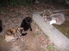 美術館西公園南派の猫