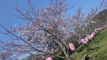 20160324桜
