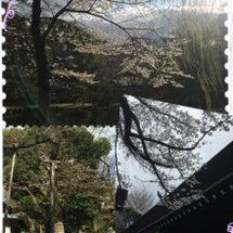 千代田区さくら祭り会…