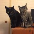 うちの猫たち&ねこ診…