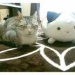 マネキン猫×猫♪