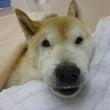 ☆老犬介護セミナー受…