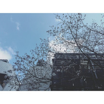 TSUTAYAと桜。…