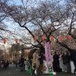 上野公園でお花見てす…