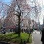 上野で花見!