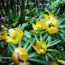 花咲く4月のヒラヤマ…
