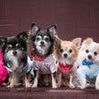 シニア犬と幸せに暮ら…