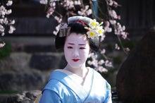 祇園白川の桜と芸舞妓撮影会009