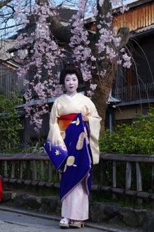 祇園白川の桜と芸舞妓撮影会006