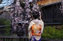 祇園白川の桜と芸舞妓撮影会005