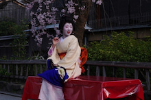 祇園白川の桜と芸舞妓撮影会002