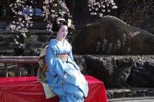 祇園白川の桜と芸舞妓撮影会008