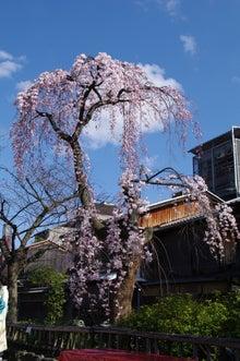 祇園白川の桜と芸舞妓撮影会001