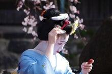 祇園白川の桜と芸舞妓撮影会010