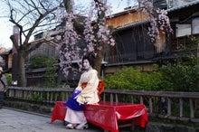 祇園白川の桜と芸舞妓撮影会004