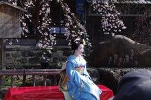 祇園白川の桜と芸舞妓撮影会007