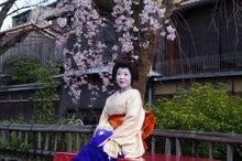 祇園白川の桜と芸舞妓撮影会003