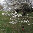白い桜と白黒と赤と緑