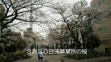 浅草某所からの桜