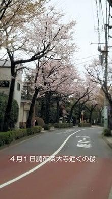 調布市深大寺の桜